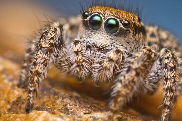 aranhas-venenosas