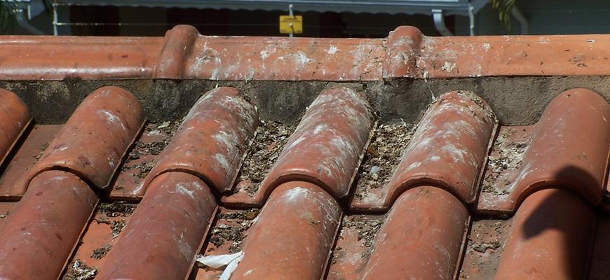 pombos-controle-de-pragas-telhado-sujo-fezes