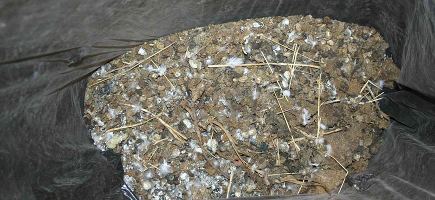 Fezes de pombos retirados de uma única calha da residência